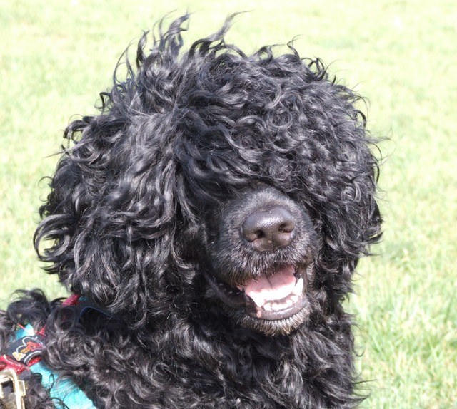 2007 Water trial royacres 048