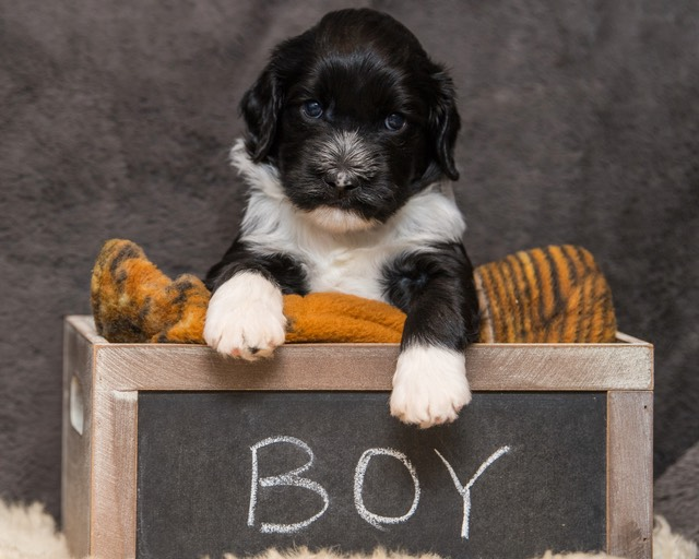 D5 Puppies (4 1-2 weeks) 18082017-6795 - Version 2