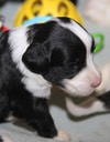 July 5 2016 - Rosie's Pups  28112