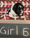 June 23 2016 - Rosie's Pups  27401 - Version 2