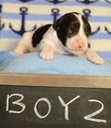 June 23 2016 - Rosie's Pups  27468 - Version 2