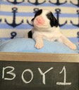 June 23 2016 - Rosie's Pups  27445 - Version 2