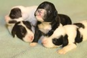 June 28 2016 - Rosie's Pups  27937