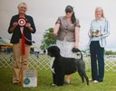Phoebe BOSS Greenwich Kennel Club Specialty show June 2015